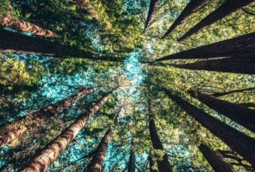 Des arbres d'une forêt tropicale