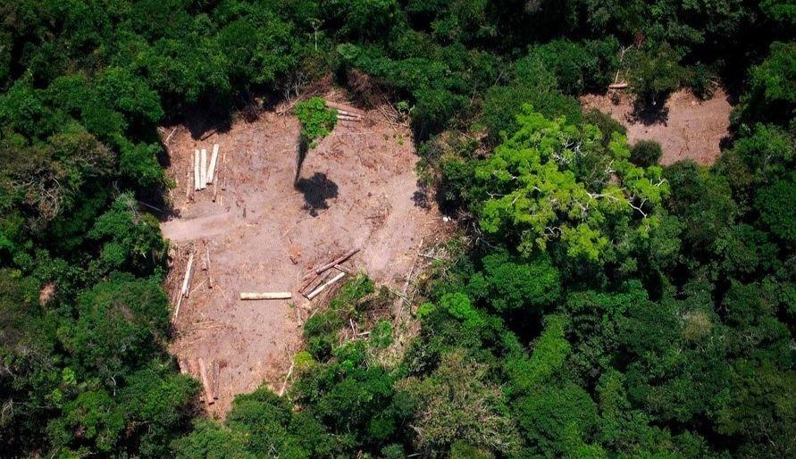 Une photographie aérienne de l'Amazonie mettant en exergue la deforestation