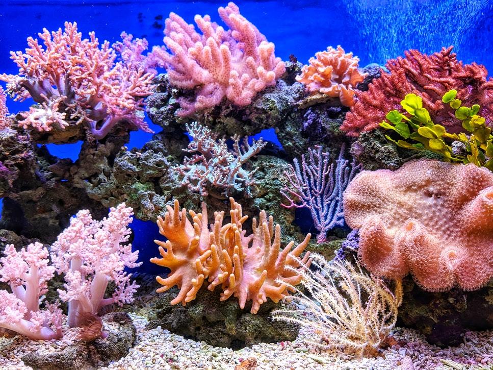 Un récif corallien au Vietnam.