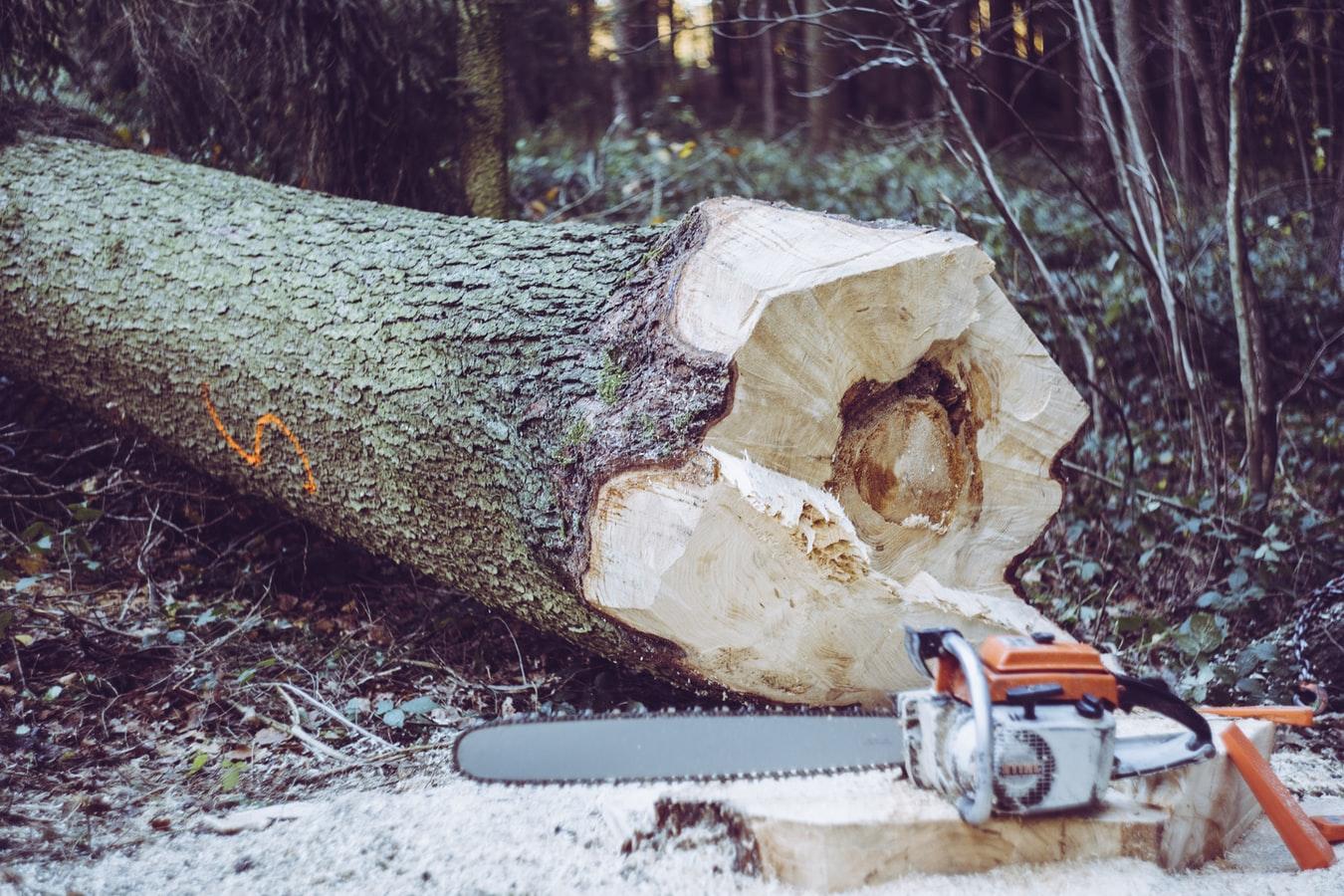 Un tronc d'arbre abattu avec la scie posée à côté.