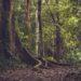 Une forêt tropicale avec de grands arbres.